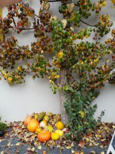 Herbstimpression in Iphofen