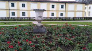 Rosen im Schlosspark Fürstenried