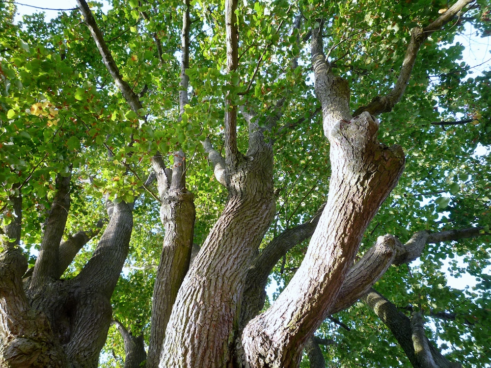Bäume in Bamberg