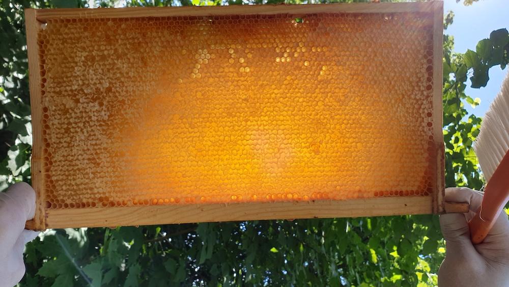 Honigwabe im Sonnenlicht